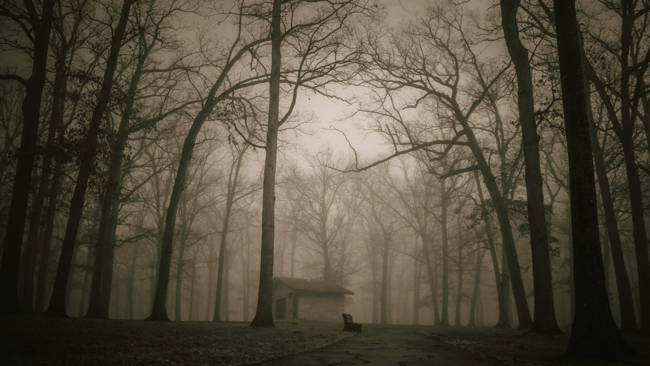 The Darkness Of The Woods - Haunting Mysteries From Around The World